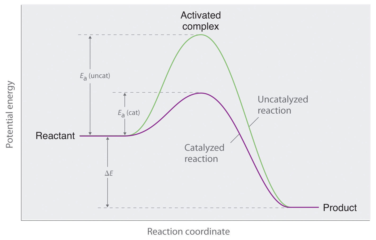 How are the following aspects of a reaction affected by the addition of a catalyst?