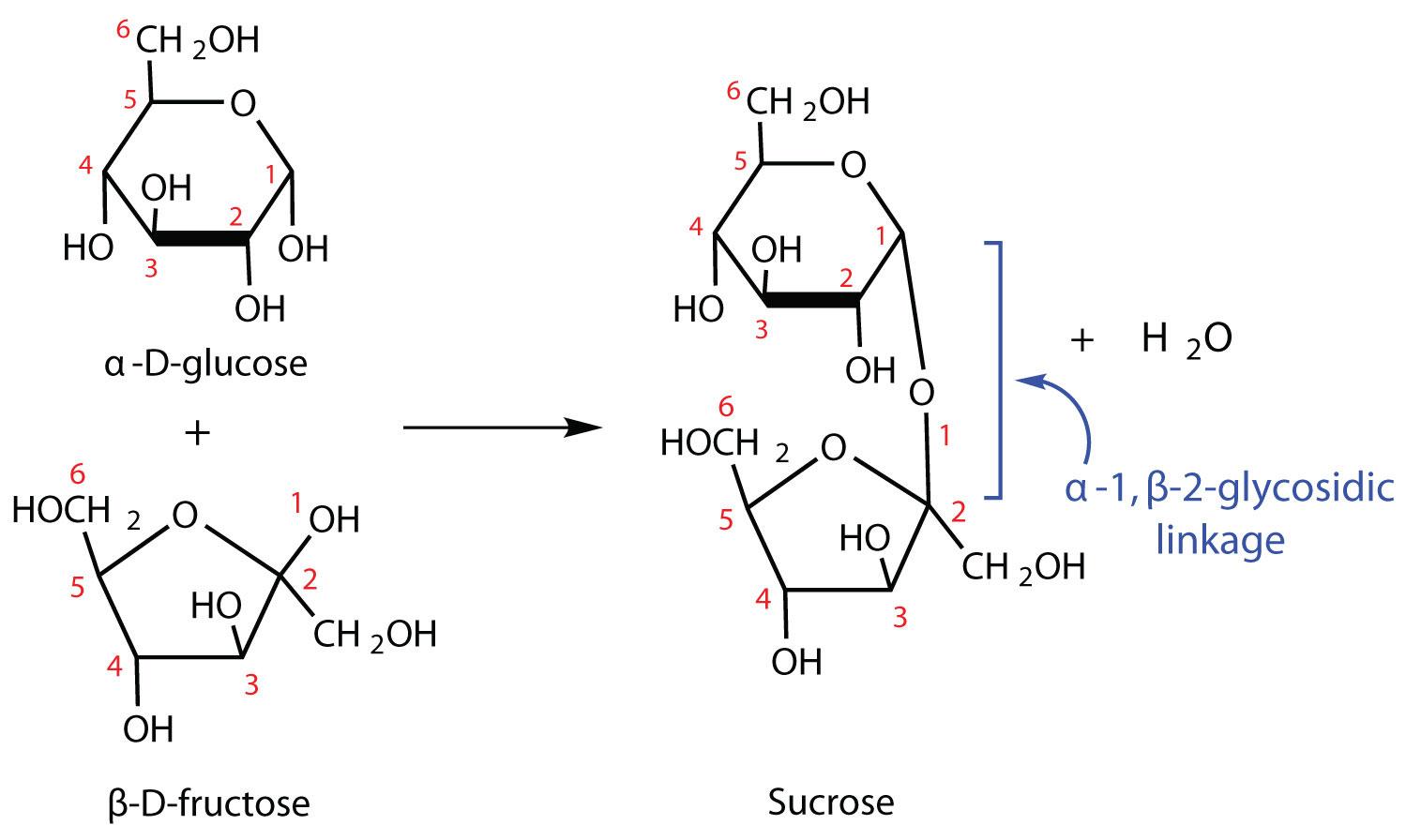 Fructose Molecu...
