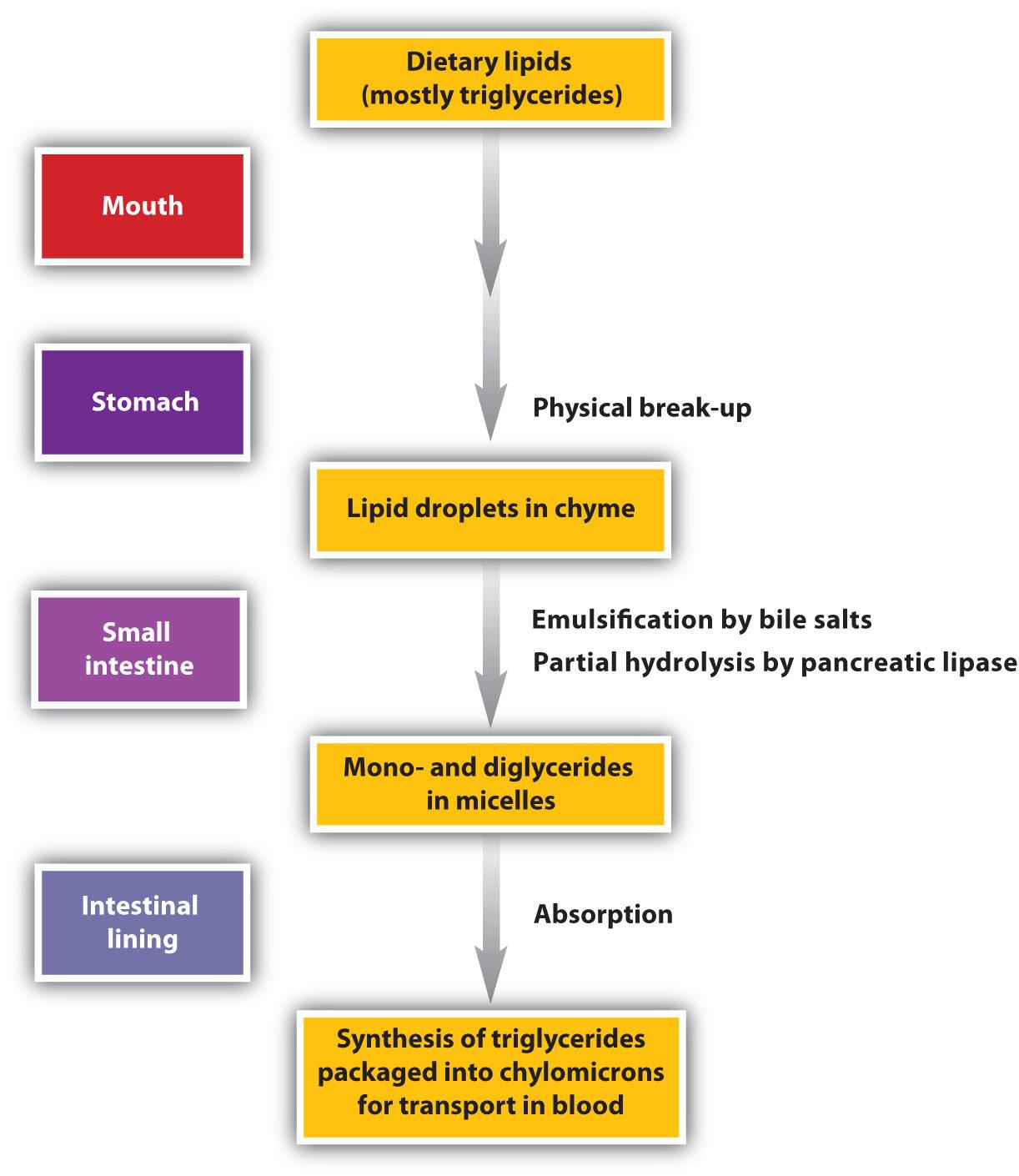 animal steroids types
