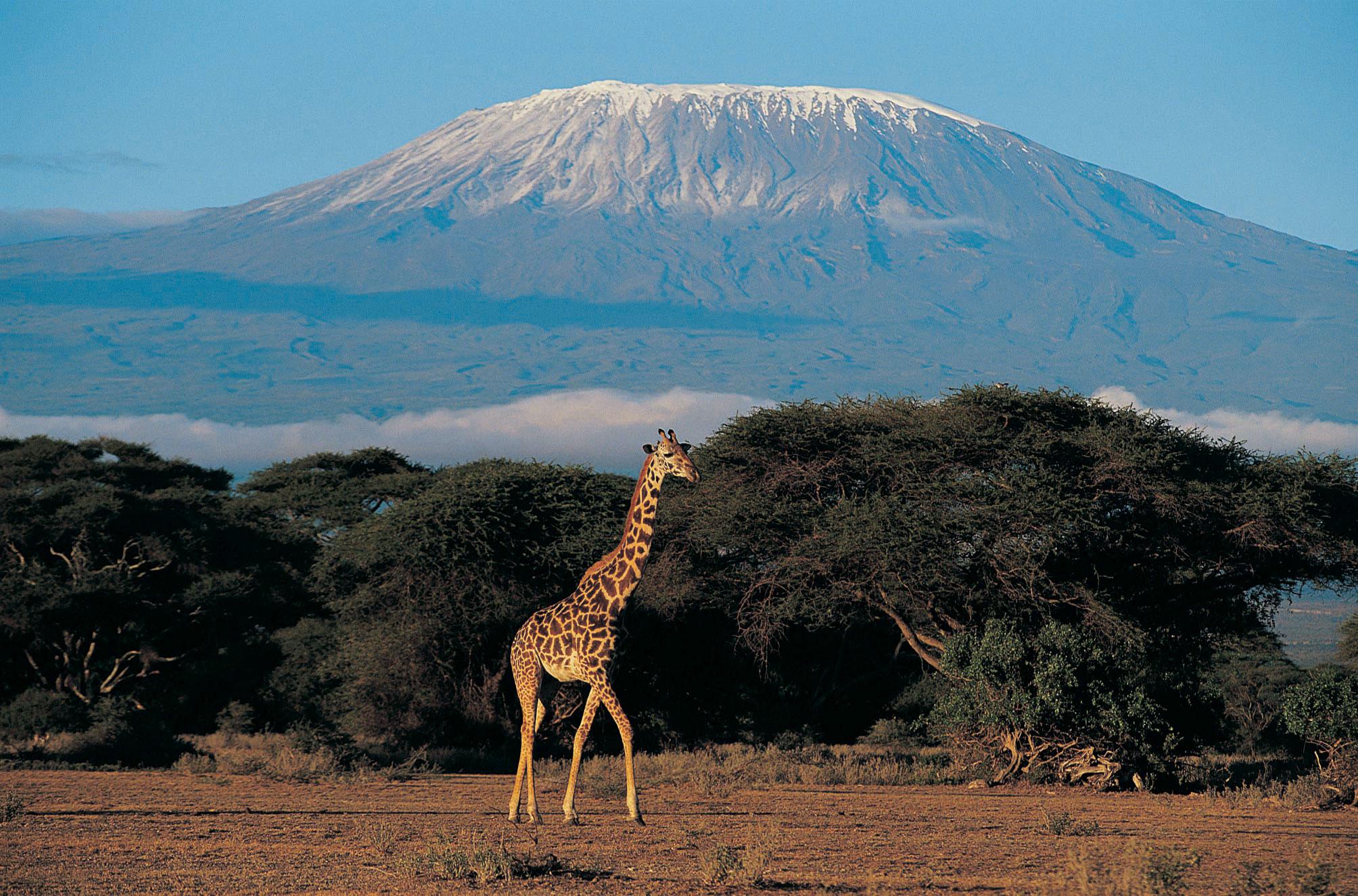 Самый высокий вулкан африки 14 фотография