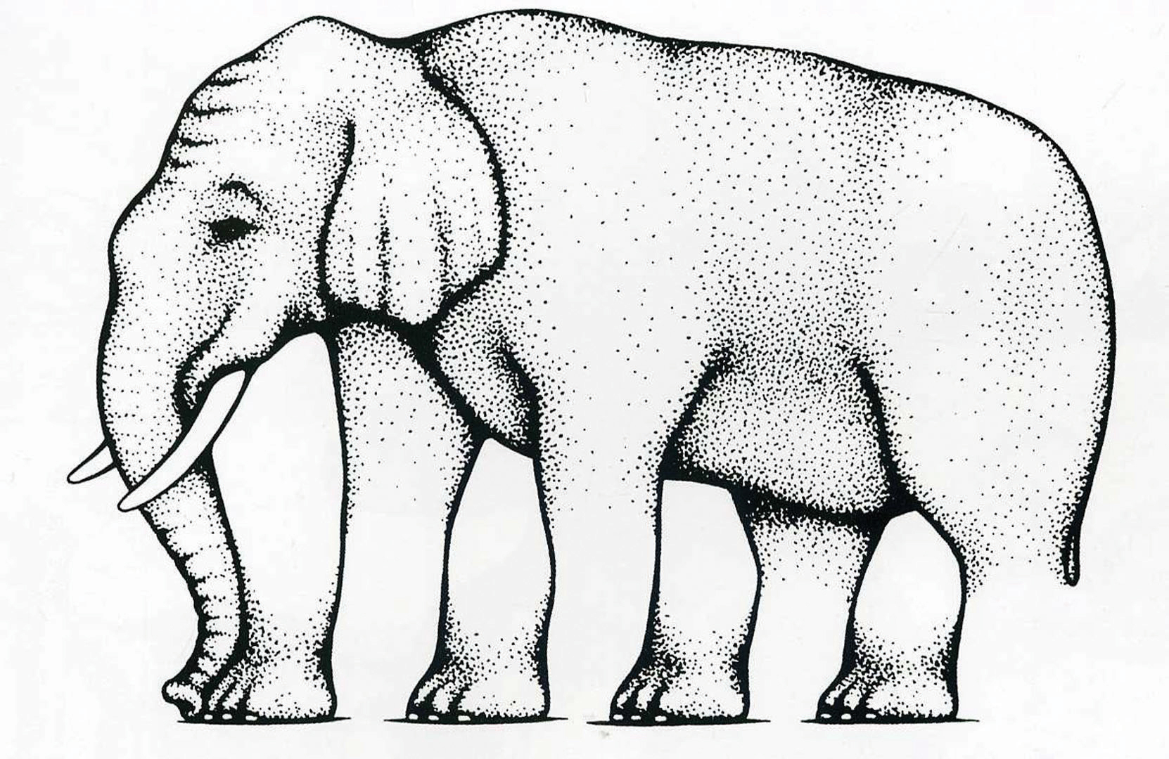 How many legs does this elephant have this section on perception is