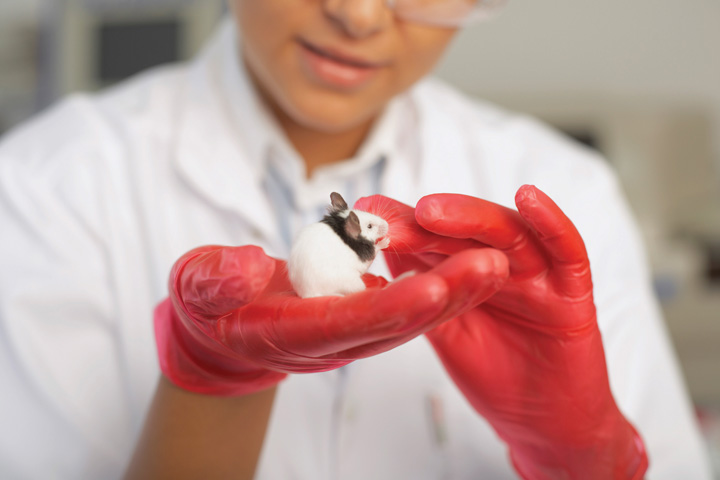 animal testing in psychological research is Ethical issues relating to painful experimentation on animals have received little  attention in the literature it is contended that this is because of.