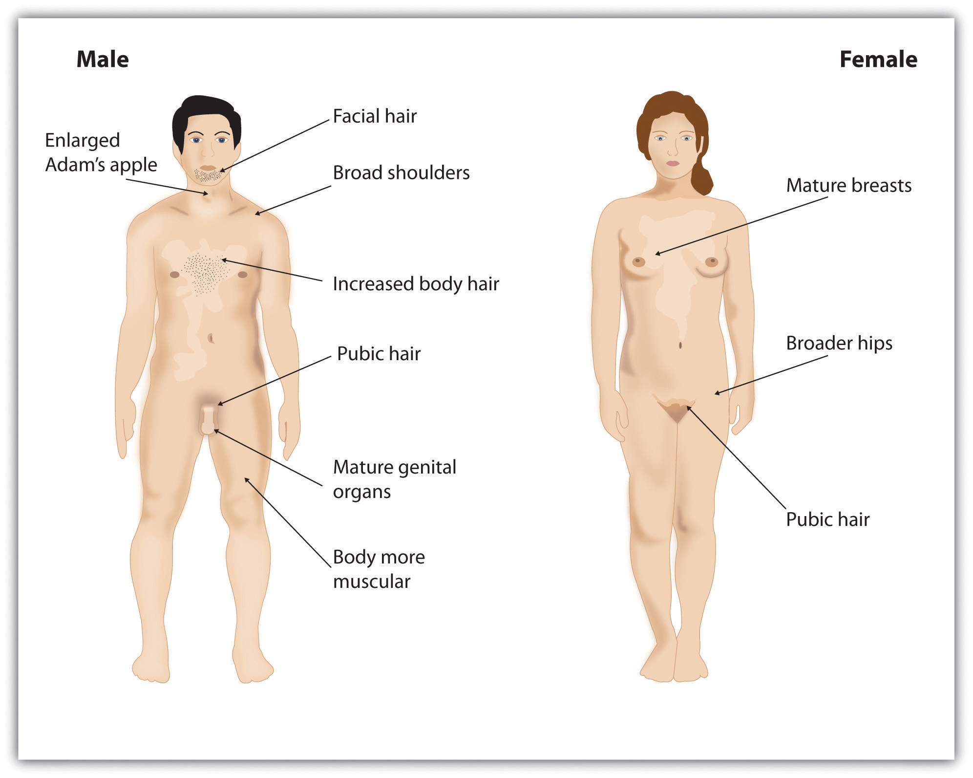 Puberty development pictures Puberty - Simple English Wikipedia, the free encyclopedia.