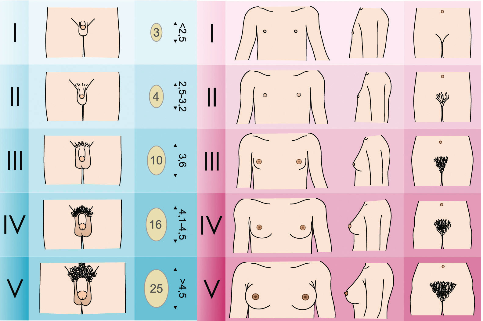 Научные название различных видов секса94