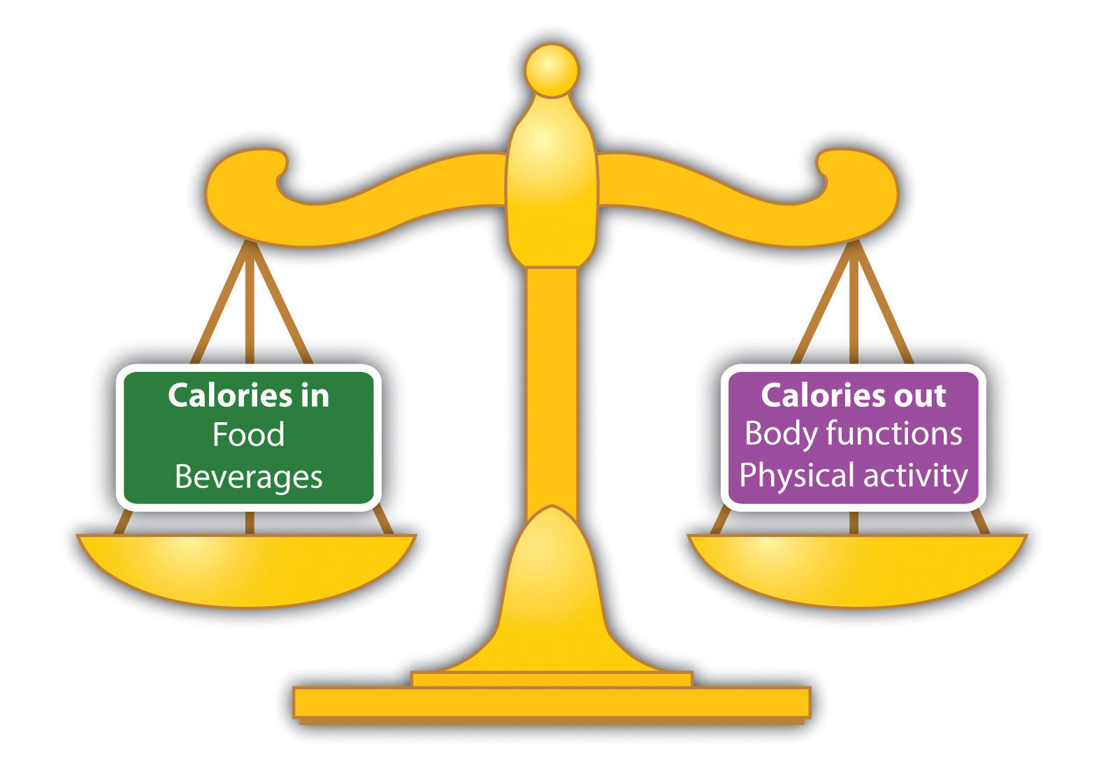 burn fat gain muscle steroids