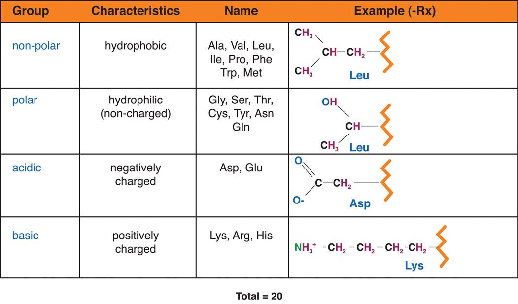 Acidic Functional Group 31