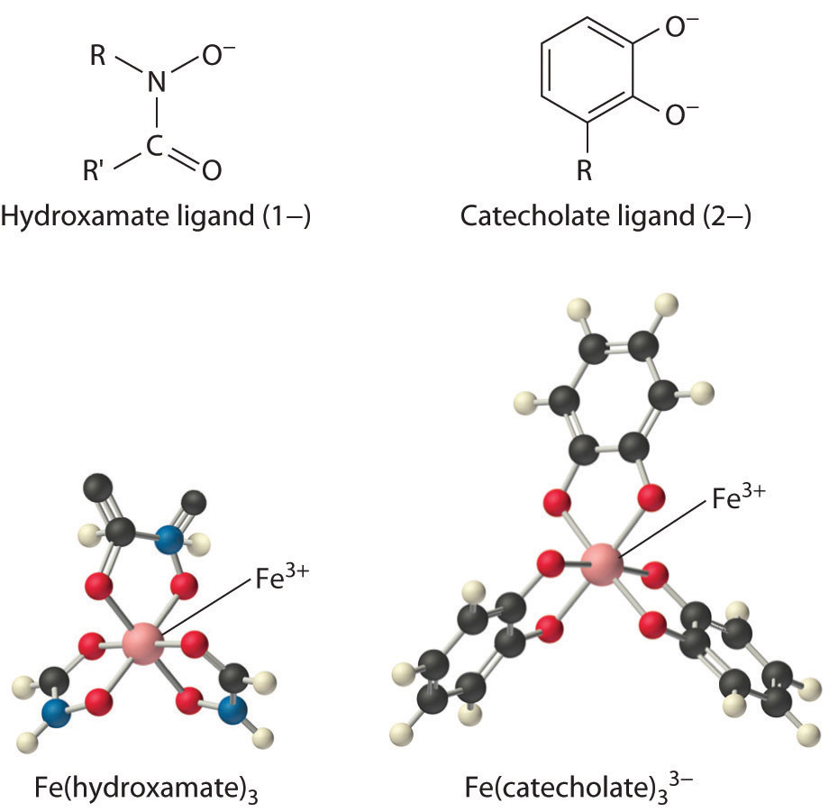 General chemistry principles patterns and applications 10 uptake and storage of transition metals biocorpaavc