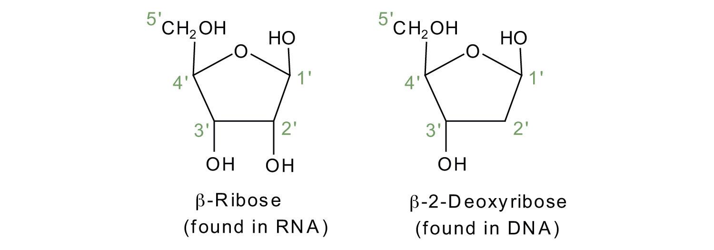 Introductory chemistry 103 flatworld ribosedeoxyribose malvernweather Choice Image