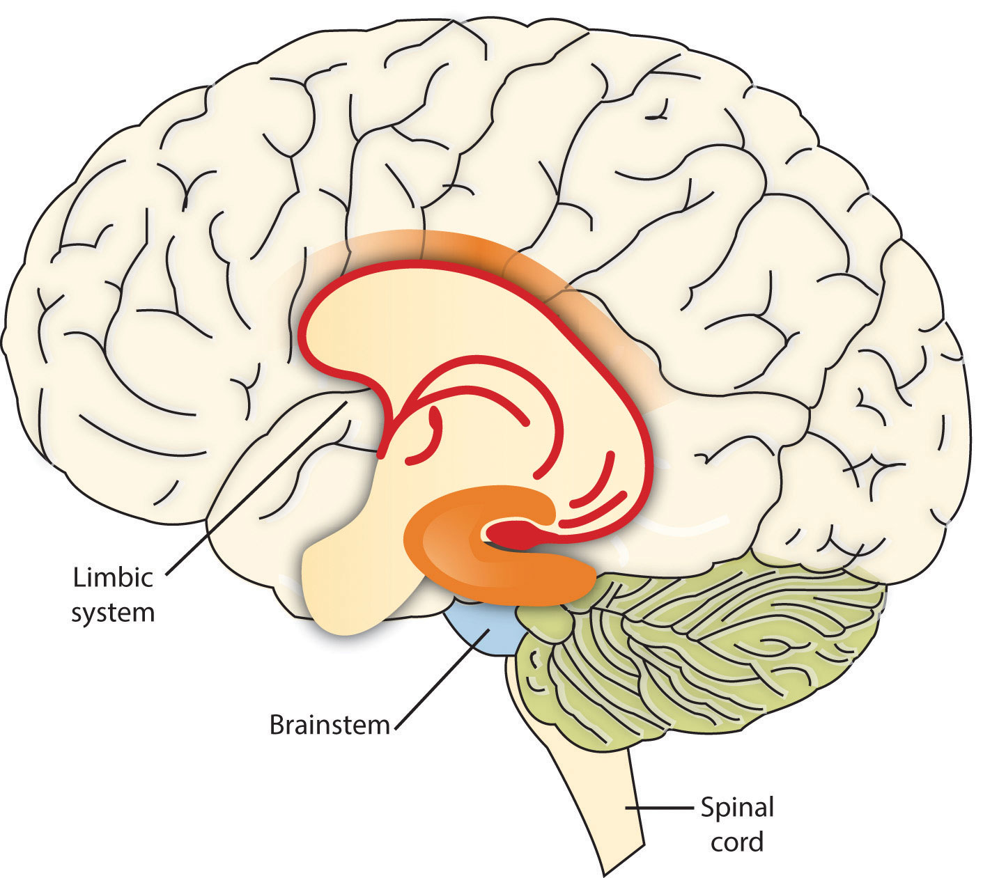 Health now an integrative approach to personal health 204 limbic system diagram ccuart Image collections